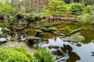 Картинки Франция Парки Пруд Кусты Деревья Maulevrier Природа