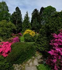 Картинка Германия Парк Рододендрон Кусты Botanischen Garten Solingen Природа