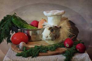 Фотография Морские свинки Овощи Помидоры Чеснок Редис Укроп В шапке Повар животное Еда
