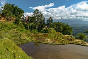 Фотографии Индонезия Тропики Вода Поля Холм Дерево Траве Limbong Природа