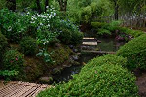 Фото Япония Киото Сады Пруд Гортензия Кусты Shokado Garden Природа