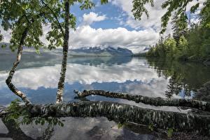 Фотография Озеро Лес Гора Парки США Отражается Ствол дерева Березы Lake McDonald, Glacier National Park, Montana Природа