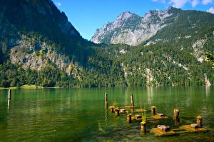 Обои Озеро Гора Лес Парки Германия Утес Бавария Berchtesgaden national Park, Schonau am Konigssee Природа