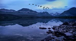 Картинка Озеро Камень Горы Птица Парки США Вечер Летит Glacier National Park, Rocky Mountains, Montana Природа