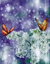 Обои Сирень Бабочки Ветвь Белых Цветы