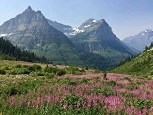 Обои для рабочего стола Гора Луга США Парки Пейзаж Скале Траве Glacier national Park, Rocky Mountains, Montana Природа