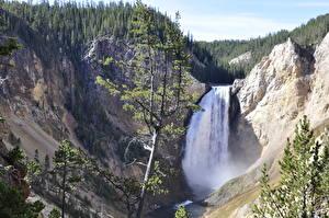 Фото Гора Река Водопады Штаты Йеллоустон Утес Ель Yellowstone River, Wyoming Природа