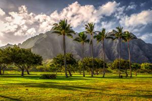 Фотография Горы Тропики Гавайи Пальмы Газоне Дерева Природа