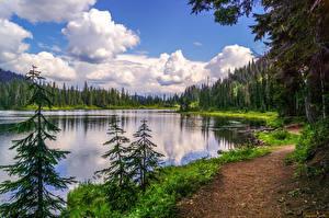 Картинки Реки Лес Побережье Пейзаж Ели Трава Природа