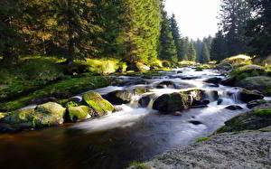 Картинка Речка Камни Леса Мхом Ель Природа