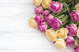 Обои Розы Доски Цветы картинки