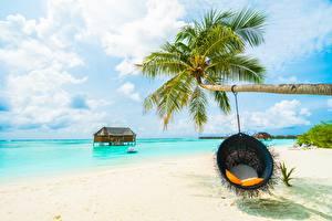 Картинка Море Тропический Пальма Кресло Пляж Природа
