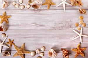 Обои Ракушки Морские звезды Доски Шаблон поздравительной открытки Фэнтези картинки