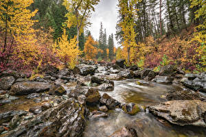 Обои Камень Осень Лес Штаты Мох Ручей Flathead National Forest, Montana state