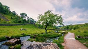 Фотографии Камни Англия Ручеек Тропы Траве Деревья Холмы Yorkshire Dales national Park, Yorkshire