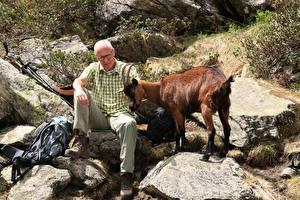 Фото Камень Коза козел Мужчины Рога Пожилой мужчина Сидит животное