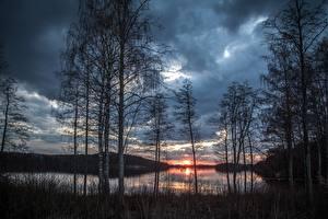Обои Рассветы и закаты Озеро Дерево Береза