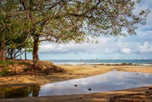 Обои Тропики Берег Дерева Пляж Costa Rica