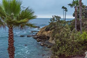 Фотографии США Побережье Камни Калифорнии Утес Пальмы Laguna Beach Природа