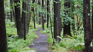 Картинки США Леса Парки Деревья Тропа State Park Laurel Summit, Pennsylvania Природа