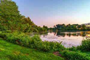 Фотография Америка Озеро Кусты Деревьев Траве Columbia Maryland Природа