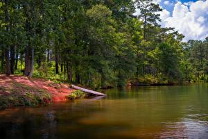Фотография Штаты Озеро Парк Побережье Флорида Деревья Anderson Park West Point Lake Природа