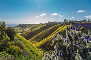 Фотография США Парки Калифорния Холмов Del Cerro Park in Rancho Palos Verdes Природа