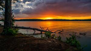 Фото Штаты Парк Рассвет и закат Речка Ствол дерева Glass Bridge Park Природа