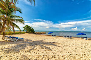 Картинка США Флорида Пляжа Шезлонг Пальма Зонт Smathers Beach Природа