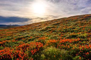 Обои США Рассвет и закат Поля Маки Калифорния Lancaster Природа