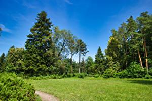 Обои Украина Парк Деревьев Трава Кусты Arboretum Trostyanets Природа