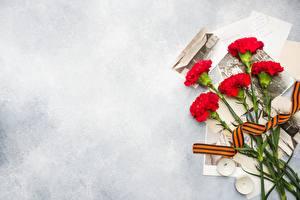 Обои 9 мая Гвоздики цветок