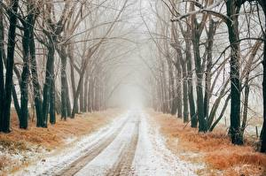 Картинки Зима Дороги Снегу Дерево Аллеи Туман