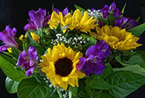 Обои Букет Альстрёмерия Подсолнечник Цветы