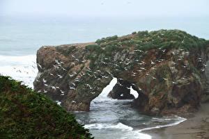 Фотография Побережье Птица Чайка Много Россия Скала Sakhalin island, Okhotsk Природа