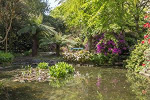 Обои Англия Сады Рододендрон Пруд Кусты Пальм Trengwainton Garden Природа