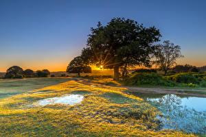 Фотография Англия Рассветы и закаты Парки Вода Дерева Трава New Forest Water Park Природа