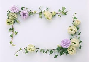 Картинка Лизантус Шаблон поздравительной открытки Сером фоне Ветки цветок