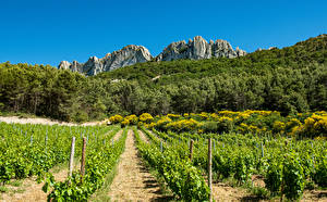 Картинка Франция Леса Поля Виноградник Скала Кусты Provence