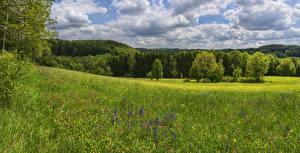 Обои Германия Лес Поля Облака Gruibingen Природа