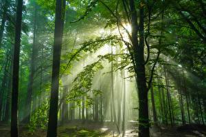Фото Германия Леса Деревья Лучи света Schwarzwald