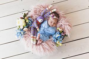 Фотографии Зайцы Розы Гортензия Игрушка Доски Грудной ребёнок Спят Дети
