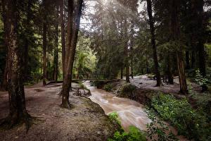 Обои для рабочего стола Израиль Парк Речка Мосты Дерева Northern Природа