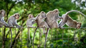 Фотографии Обезьяна Забавные Ограда животное
