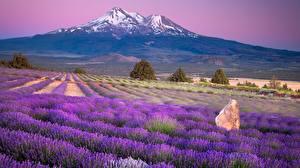 Картинки Горы Поля Лаванда Франция Горизонта Provence region
