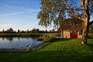 Фотография Нидерланды Здания Пруд Утка Дерева Трава Utrecht Природа
