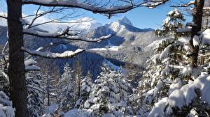 Картинка Польша Горы Зимние Дерево Снега Tatra Природа
