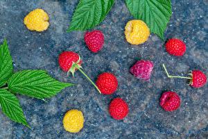 Фотография Малина Разноцветные Листва