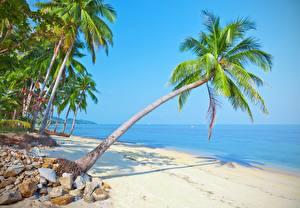 Обои Море Пальм Пляж Природа