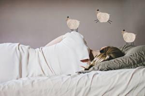 Фотография Овцы Спит Лежачие Подушки молодые женщины